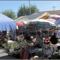 Fruit & Veg sellers - Sunday Tocha Market